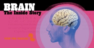 Brain: The Inside Story