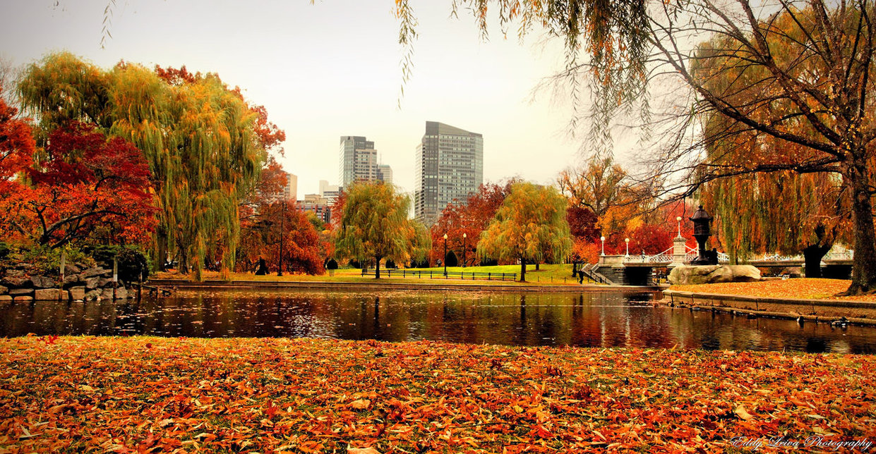 Boston, MA Fall Foliage Planner 2015 – Jessica Haas Designs